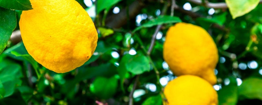 6 beneficios del limón que seguramente no conocías